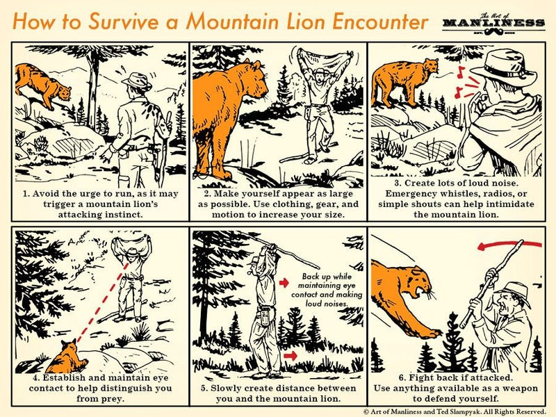 Illustration for article titled Six Tips for Surviving a Mountain Lion Encounter