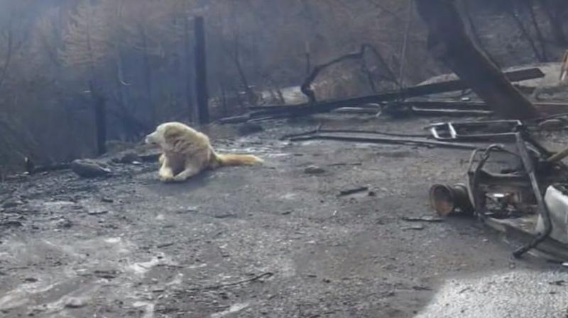 Illustration for article titled Un perro ha esperado un mes el regreso de su dueña entre los restos de su casa tras el letal incendio de California