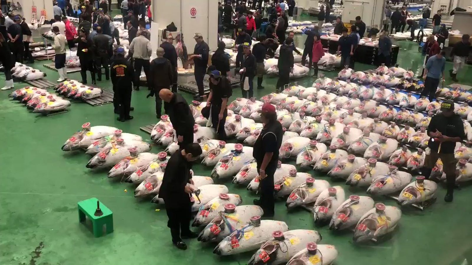 Tokyo's New Fish Market Opens, Things Didn't Go Well