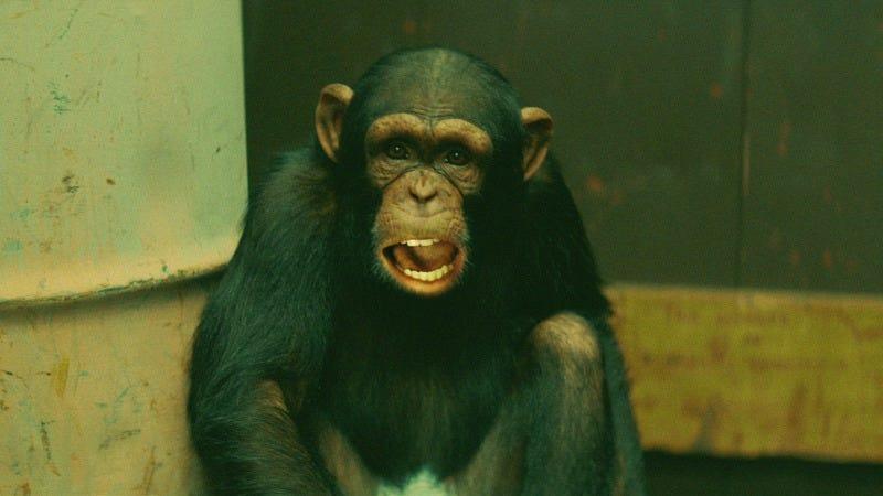 "Illustration for article titled Big Time In Hollywood, FL: ""Monkey Largo"""