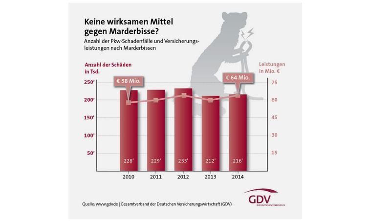 Wie niedliche Frettchen-ähnliche Tiere Ursache Deutschland $ 65 ...
