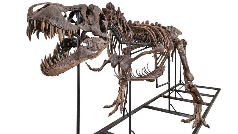 Illustration for article titled This $2.39 Million Half-Complete T-Rex Doesn't Cost Money, It Makes Money