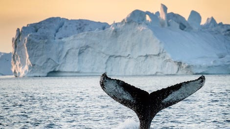 whaling humans need to stop killing whales Japan has defended the activities of its whaling fleet, after its ships returned home on friday having killed 333 whales in the antarctic, achieving its goal for the second year under a revised.
