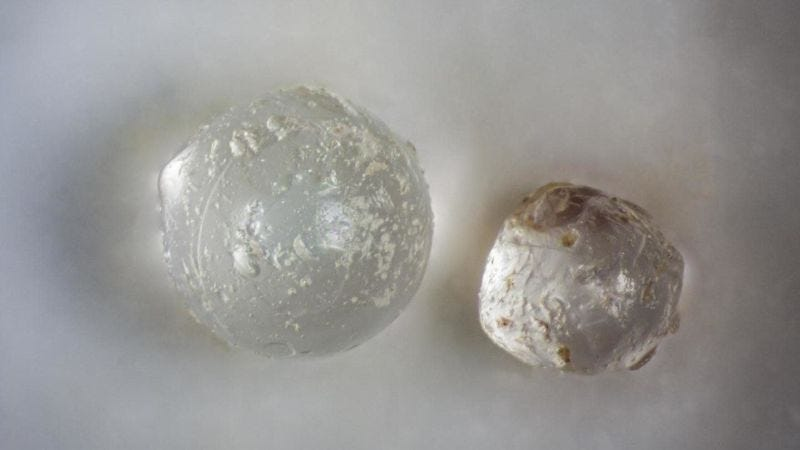 Dos de las microtectitas encontradas en los fósiles de molusco.