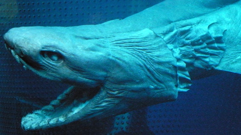 Image via Wiki Commons/Opencage.