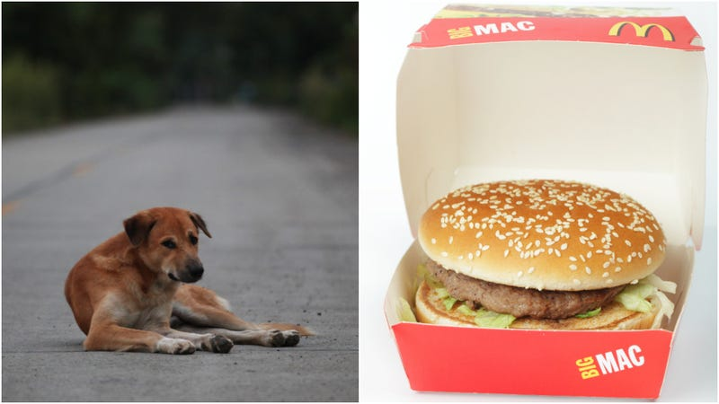 Illustration for article titled Dog fakes being a stray to get McDonald's handouts, owner says