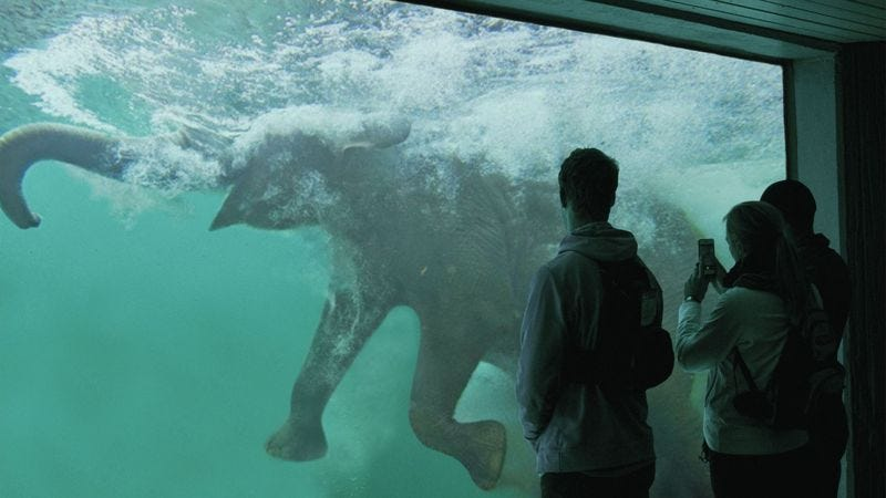 The Elephant Drowning show can be viewed every day at SeaWorld at 11 a.m., 1 p.m, and 3 p.m. in Shamu Stadium.