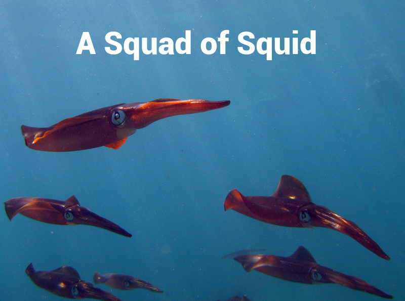 Illustration for article titled A bunch of squid should be a 'Squad'.  Time for change.