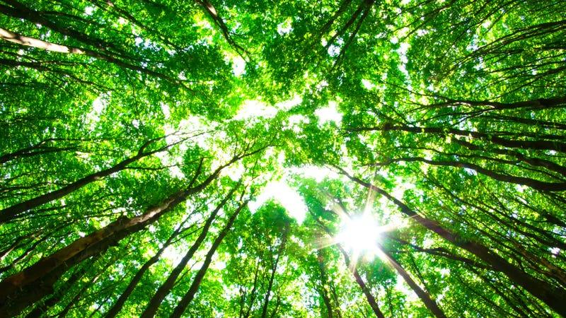 Irónicamente, la Tierra es mucho más verde ahora que hace 30 años por las emisiones de CO2