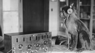 Jock the monkey listens in on the Scopes trial verdict to find out if he is some distant kin of the humans.