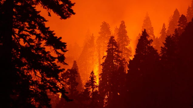 10% of the World s Sequoias Burned in a Single Wildfire Last Year