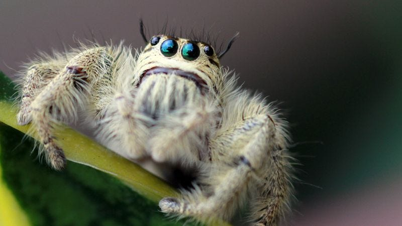 Illustration for article titled 9 Photos That Prove Spiders Can Be Cute When They're Not Eating Your Dog
