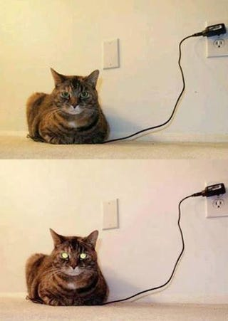 Illustration for article titled How to Tell When Your Cat is Fully Charged