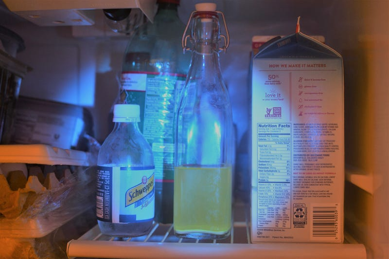Mead brewed with a genetically engineered green fluorescent yeast that glows under a blacklight. Image: Josiah Zayner