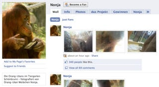 Illustration for article titled Orangutan Takes Photos, Shares Them on Facebook