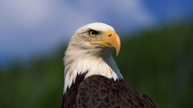 Illustration for article titled How Many Of These Bald Eagles Do You Recognize?