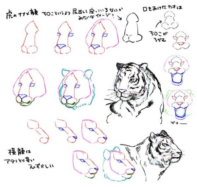 How To Draw a Tiger from a Penis