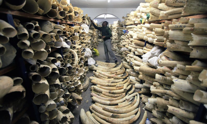 Illustration for article titled U.S. to Implement 'Near-Total' Ban on Ivory Trade