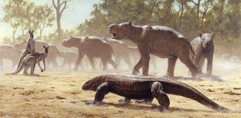 "Artist's depiction of a Diprotodon ""mob"" undertaking mass migration, while  a giant lizard (Megalania) and a pair of giant grey kangaroos look on. (Image: Laurie Beirne)"