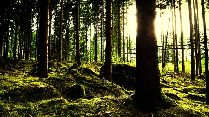 Photo: - bjornsphoto -