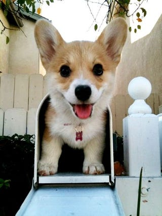 Illustration for article titled Did Anyone Send For a Corgi By Post?
