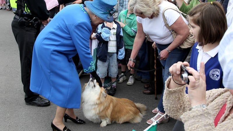 Illustration for article titled The Queen's Last Corgi Has Died (For Real This Time)