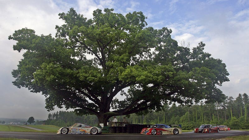 Illustration for article titled R.I.P., The Most Famous Tree In Racing