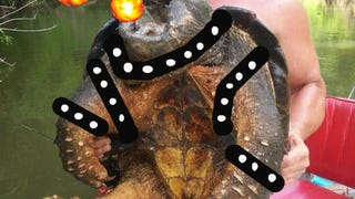"""The Butchershop:  OK Fisherman Snags """"Alligator Snapping Turtle"""""""