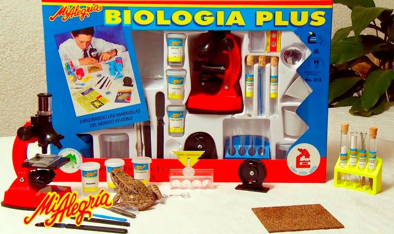 Illustration for article titled México prohíbe la venta de un kit de biología para niños porque incluye una rana muerta