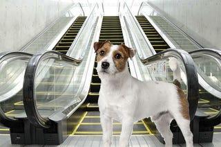 Illustration for article titled Na tessék: pont ma darálta be egy mozgólépcső egy kutya lábát