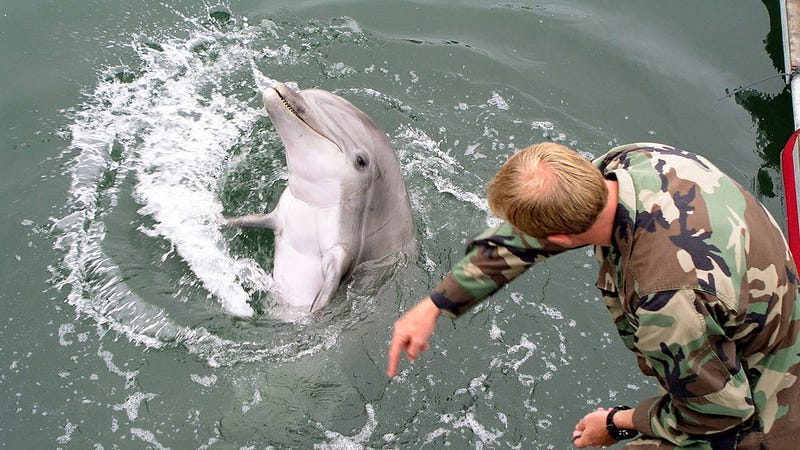 A dolphin responding to a hand gesture... or perhaps baiting a human in preparation for attack.