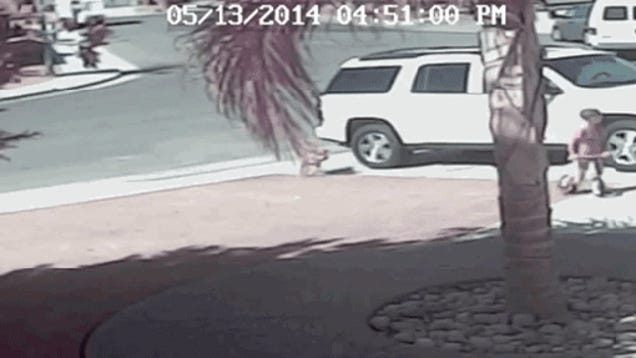Cat Rescues Child From Dog Attack In Driveway