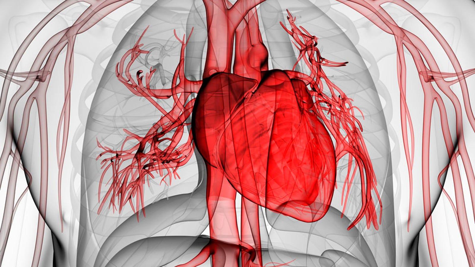 Científicos logran cultivar tejido cardíaco que late por sí mismo