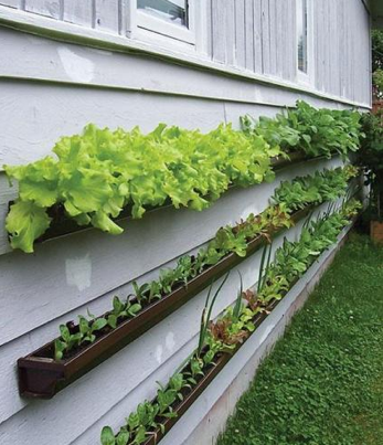 If you d love to do a little at home gardening but don t have much space to  do your planting  a simple gutter garden might be the perfect option. Gutter Gardens Grow Produce Without Taking Up Space