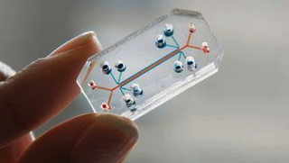 Illustration for article titled This See-Through Microchip Can Mimic an Actual Human Organ