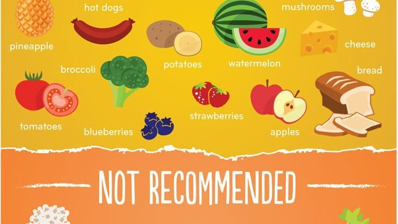 What Food Is Okay For Dogs To Eat