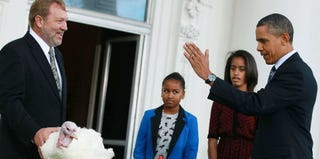President Obama and daughters Sasha and Malia pardoning a turkey in  2011 (Mark Wilson/Getty Images)