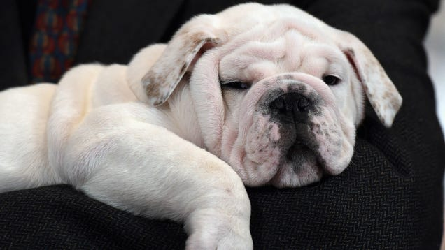 Pet Store Puppies Are Giving People Bloody Diarrhea