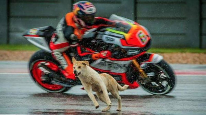 Illustration for article titled Dog Who Interrupted MotoGP Practice Session Has Found A Loving Home