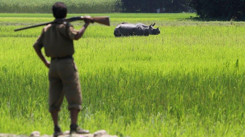 Imagen: Anupam Nath / AP