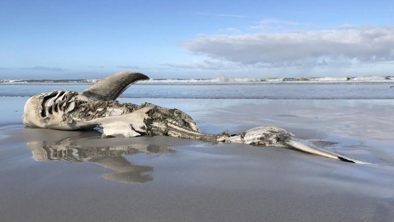 Imagen: Hennie Otto/Marine Dynamics/Dyer Island Conservation Trust