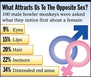 Illustration for article titled What Attracts Us To The Opposite Sex?