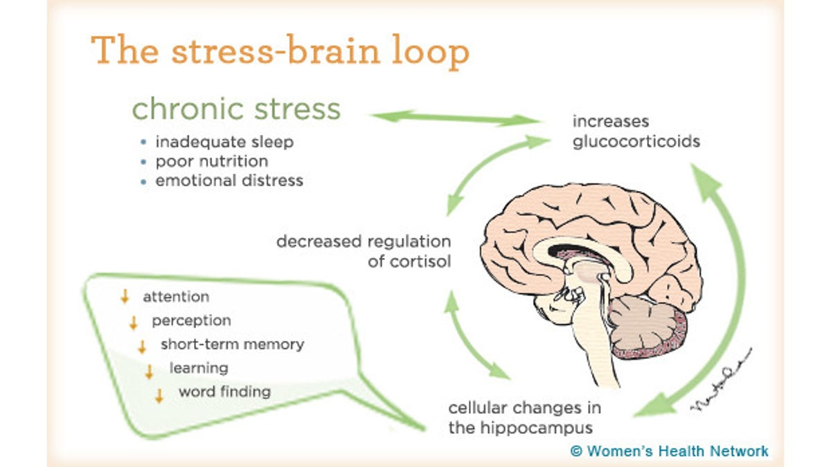 How Stress Breaks Down Your Mind and Body (and How to Fight