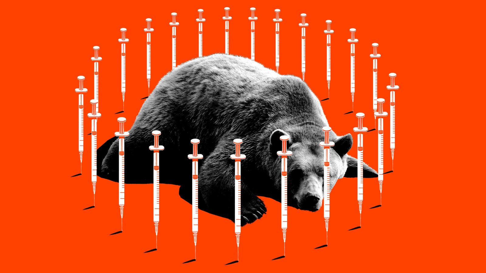 This Was Supposed to Be a Story About a Bizarre Anti-Vaccine Rally and a Sedated Bear. Then It Got Weird.