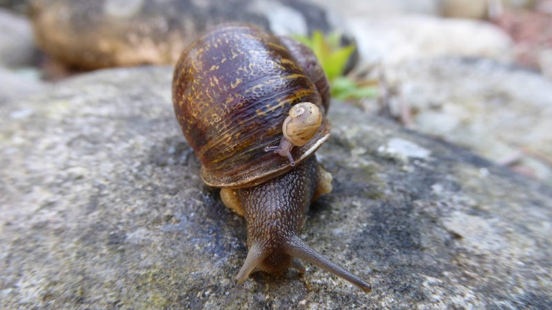 Jeremy with a baby snail (Image: Angus Davidson)
