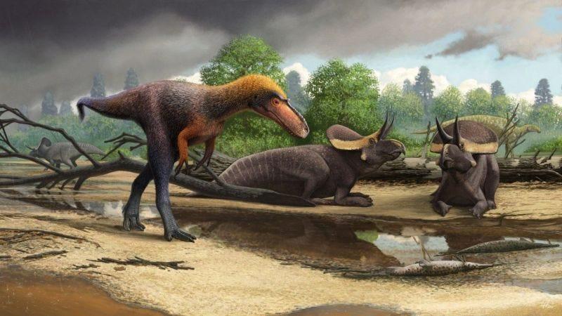 Este familiar lejano del Tyrannosaurus Rex era todo un asesino en miniatur