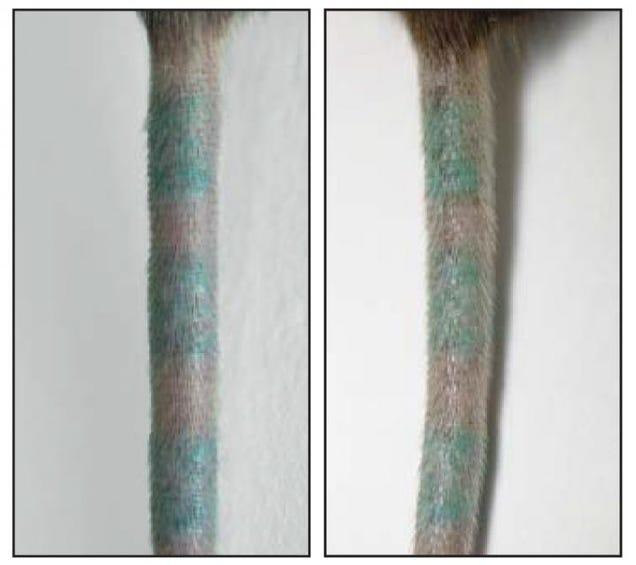 Los tatuajes no están quietos: tus células inmunitarias se comen la tinta y la vomitan, una y otra vez Hczt4rbda3t9cjnbcnyi