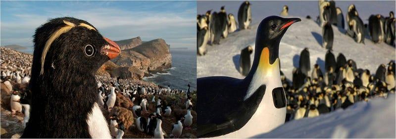 Illustration for article titled Así son los increíbles robots-espía de pingüinos en el Polo Sur