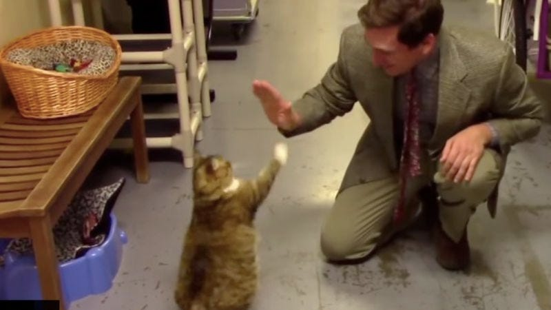 this low budget commercial for a cat rescue shelter is purrrrfectly