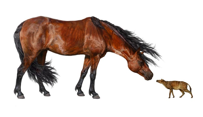 Illustration for article titled Ancient global warming may have caused horses to shrink